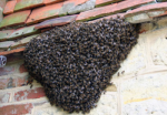Swarm on House