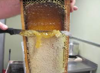 Uncapping Honey