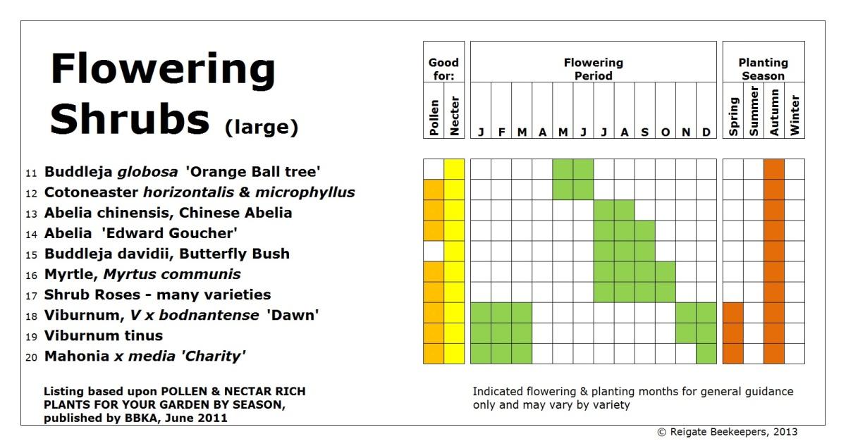 Flowering shrubs large ii v4 for Large flowering shrubs