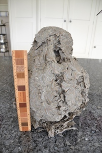 """Wasp Nest - Rear side (Approx 16"""" Tall)"""